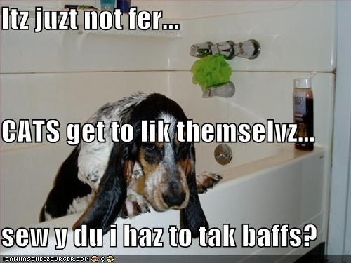 Itz juzt not fer... CATS get to lik themselvz... sew y du i haz to tak baffs?
