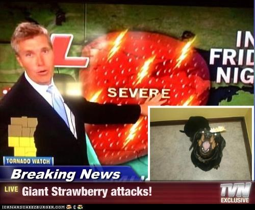 Breaking News - Giant Strawberry attacks!