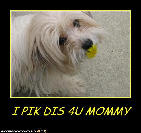 I PIK DIS 4U MOMMY