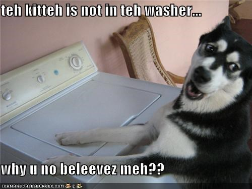 teh kitteh is not in teh washer...  why u no beleevez meh??