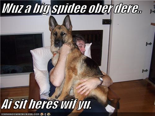 Wuz a big spidee ober dere..  Ai sit heres wif yu.