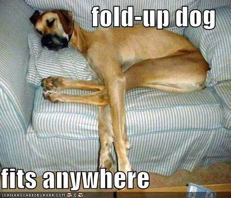 fold-up dog  fits anywhere
