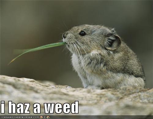 i haz a weed