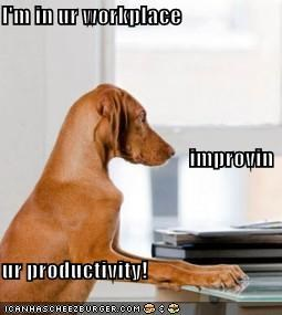 I'm in ur workplace improvin ur productivity!