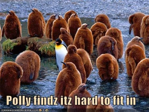 Polly findz itz hard to fit in