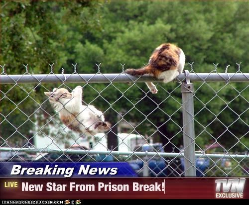 Breaking News - New Star From Prison Break!