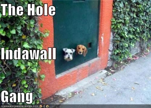 The Hole Indawall Gang