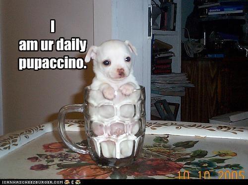 cappuccino,chihuaha,coffee,coffee cup,mug,pupaccino