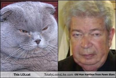 This LOLcat Totally Looks Like Old Man Harrison from Pawn Stars