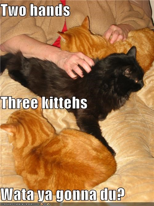 Two hands Three kittehs Wata ya gonna du?