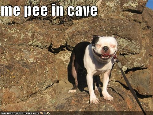 cave,contented,french bulldogs,happy,pee,peeing,silly face