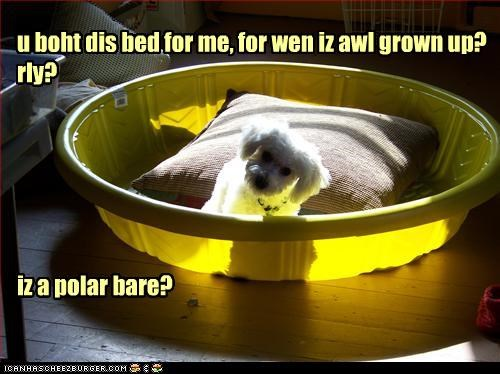 u boht dis bed for me, for wen iz awl grown up? rly?       iz a polar bare?