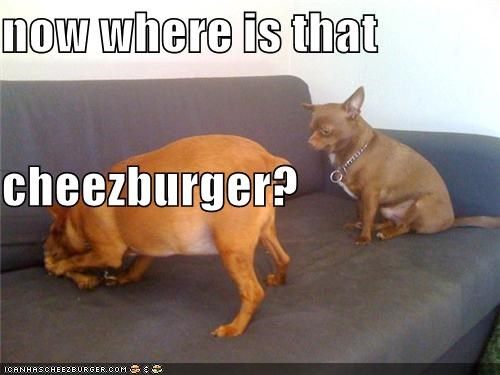 now where is that  cheezburger?