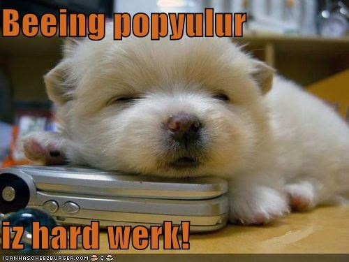 cell phone,hard work,popular,puppy,tired,whatbreed