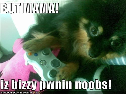 busy,interrupted,mixed breed,mom,noobs,pomeranian,pwning
