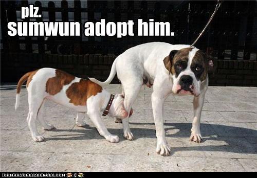 adopt him,annoyed,biting,bulldog,Hall of Fame,puppy
