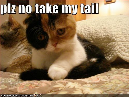 plz no take my tail