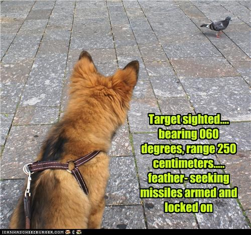 Target sighted.... bearing 060 degrees, range 250 centimeters..... feather- seeking missiles armed and locked on
