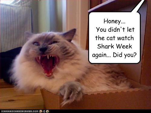 Honey...  You didn't let the cat watch Shark Week again... Did you?