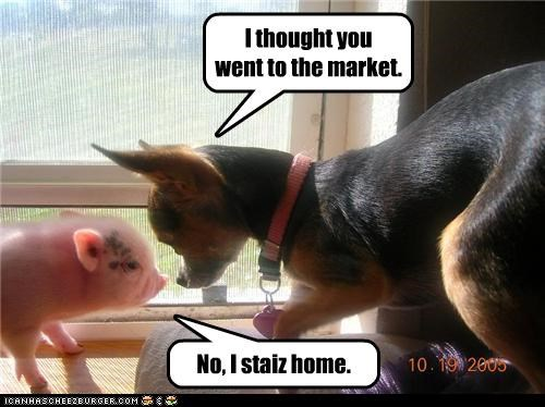 chihuahua,Hall of Fame,market,piglet,staying home,this little piggy