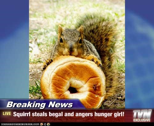 Breaking News - Squirrl steals begal and angers hunger girl!