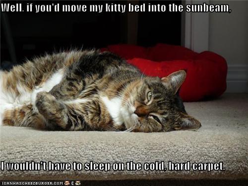 caption,carpet,cat,guilt trip,kitty bed,sleeping,sunbeam,whining