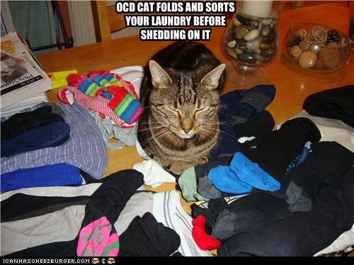 OCD CAT FOLDS AND SORTS YOUR LAUNDRY BEFORE SHEDDING ON IT