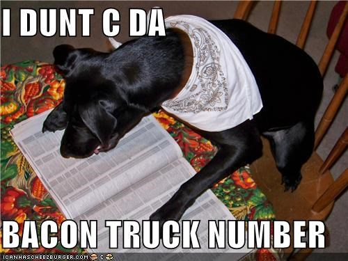 bacon truck,labrador retriever,phone book,phone number,phonebook,scarf
