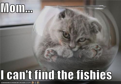 Mom...  I can't find the fishies