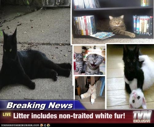 Breaking News - Litter includes non-traited white fur!
