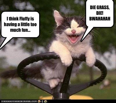 caption,demented face,kitten,laughing,lawnmower,too much fun