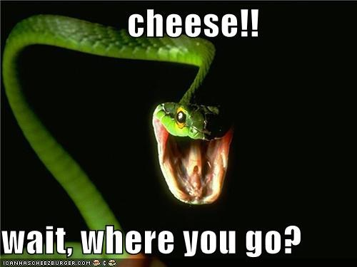 cheese!!  wait, where you go?
