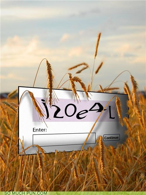 CAPTCHA in the Rye