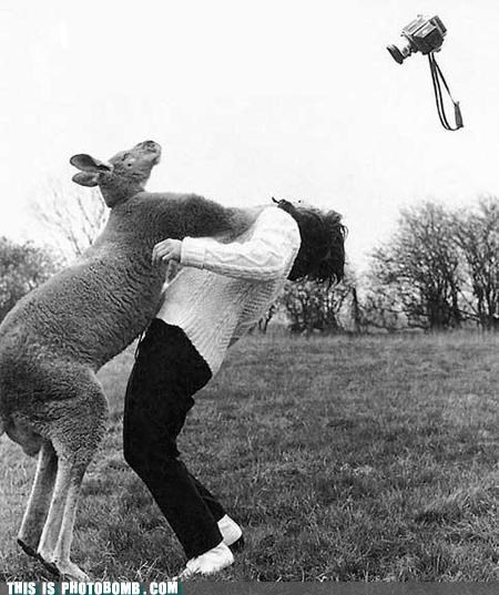 awesome,k-o,kangaroo,knock out,photographer