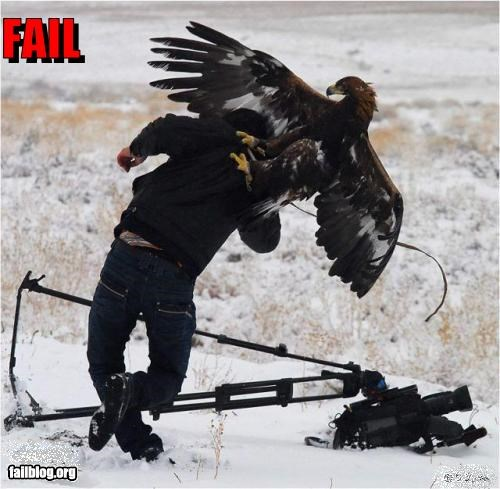Filming eagles Fail