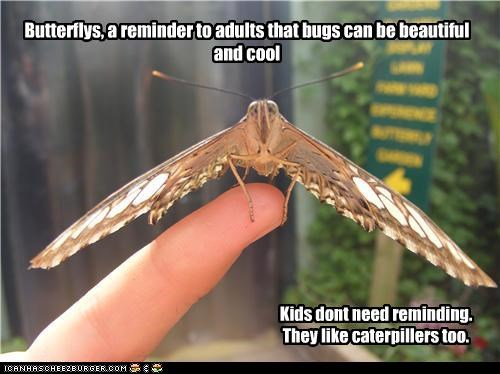Butterflys, a reminder to adults that bugs can be beautiful and cool