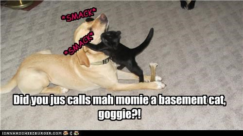 Did you jus calls mah momie a basement cat, goggie?!