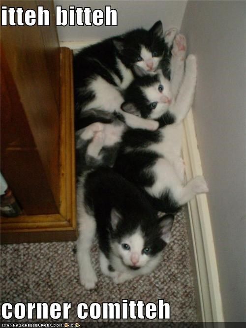caption,corner,cramped,cuddling,itteh bitteh kitteh committeh,kitten