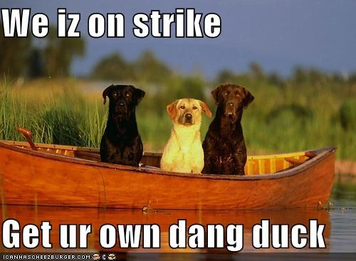 We iz on strike  Get ur own dang duck