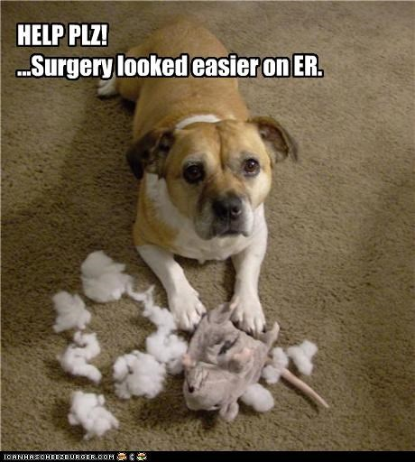 accident,ER,help,oops,stuffed animal,surgery,TV,whatbreed