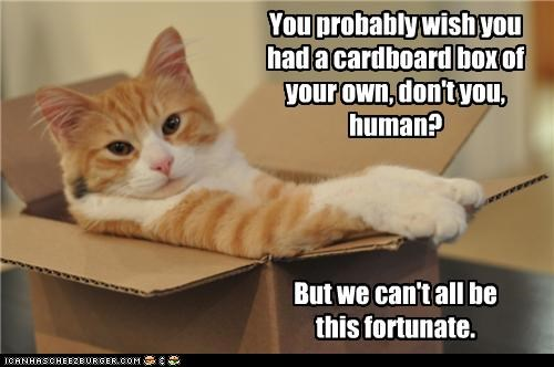 box,caption,cat,fortunate,luck,ownership