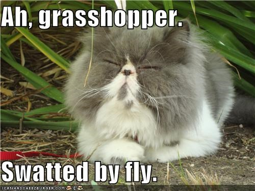 Ah, grasshopper.  Swatted by fly.