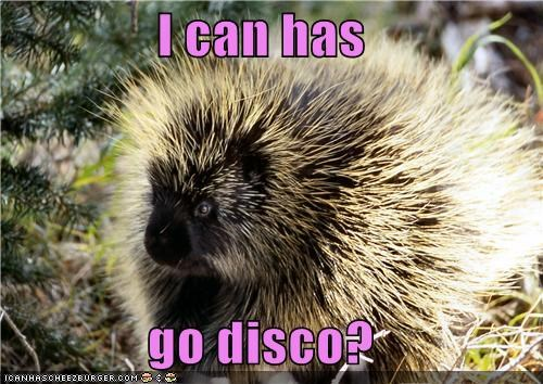 I can has  go disco?