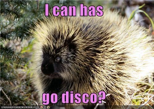 I can has  go disco?