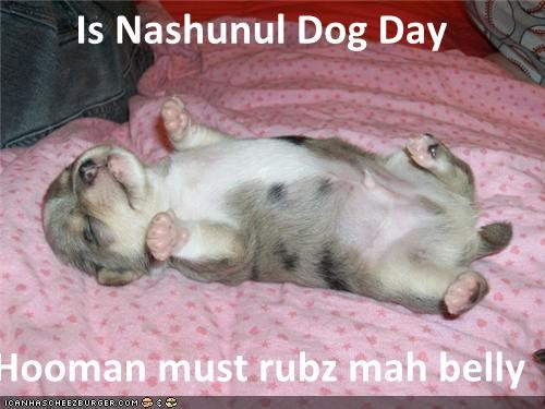 Is Nashunul Dog Day  Hooman must rubz mah belly