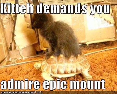 Kitteh demands you  admire epic mount