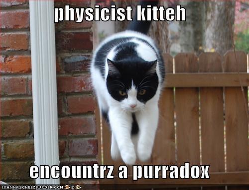 physicist kitteh  encountrz a purradox