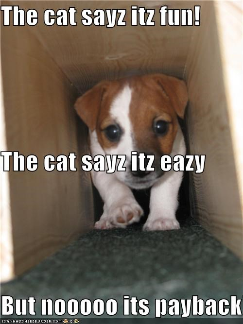 The cat sayz itz fun! The cat sayz itz eazy But nooooo its payback!