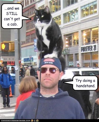 caption,cat,handstand,leash,new york city,taxi,unable