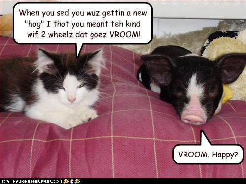 "When you sed you wuz gettin a new ""hog"" I thot you meant teh kind wif 2 wheelz dat goez VROOM!"
